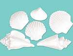 White Plastic Seashells