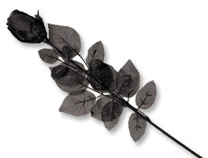 24 inch Black Fabric Rose